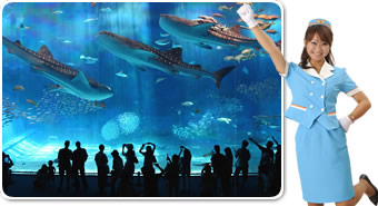 巨大水槽の水族館は必見!広大な広場で心も体もリフレッシュ